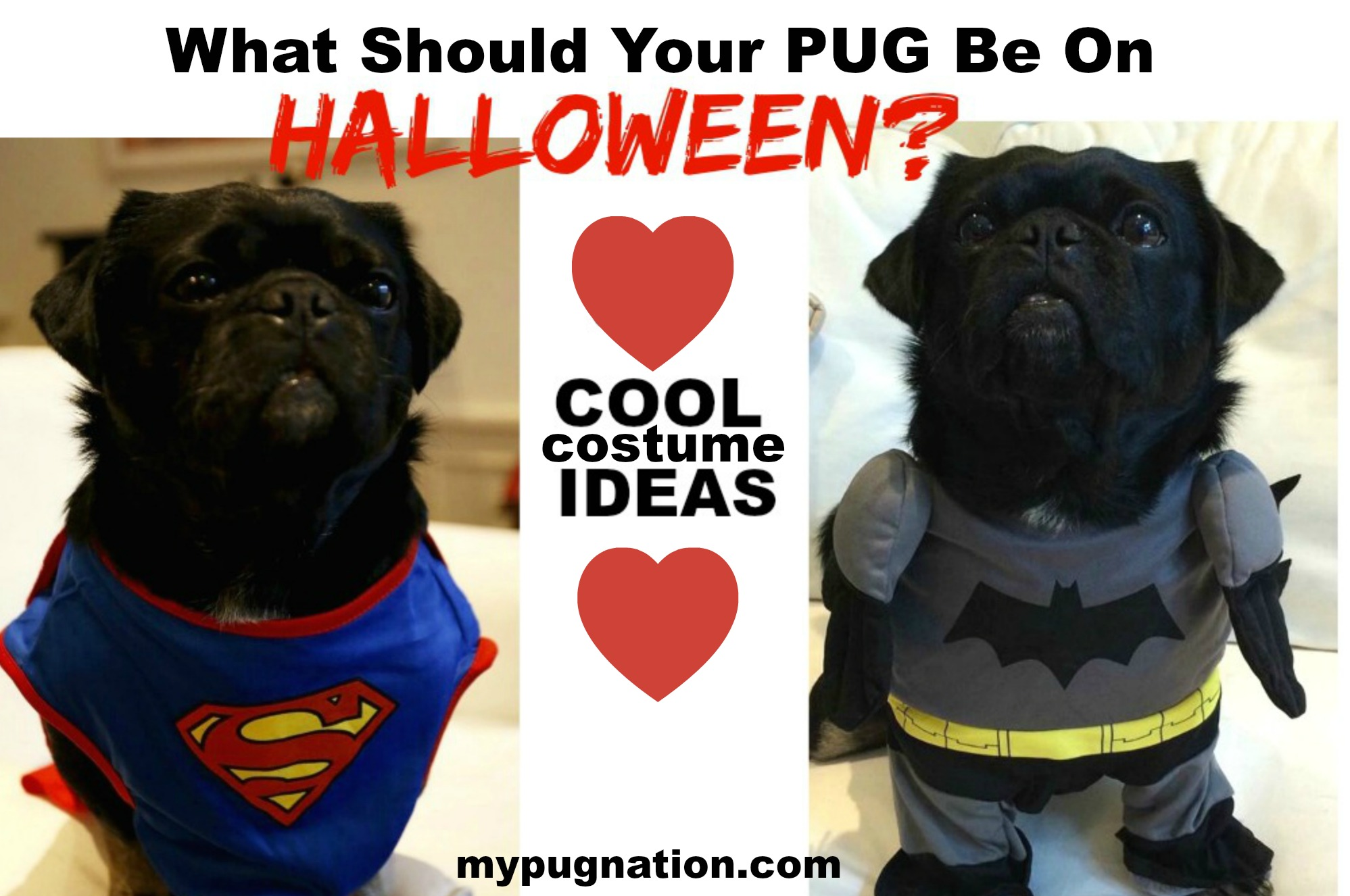 sc 1 st  My Pug Nation & What should your Pug be for Halloween? - MyPugNation