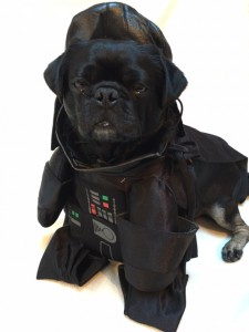 Kilo the Pug dressed as Darth Vader for Halloween