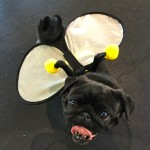 Photos From The Best Halloween Party Just For Pugs -Pugoween 2016 - bee