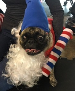Photos From The Best Halloween Party Just For Pugs -Pugoween 2016 - elf