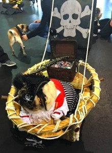 Photos From The Best Halloween Party Just For Pugs -Pugoween 2016 - pirate