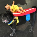 Photos From The Best Halloween Party Just For Pugs -Pugoween 2016 - surfer