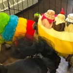 Photos From The Best Halloween Party Just For Pugs - sunday costume