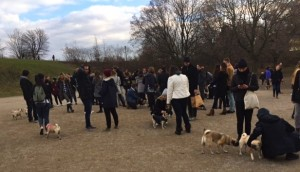 crowd at Trintiy Bellwoods dog bowl for the Novemeber 2016 Toronto Pug Grumble