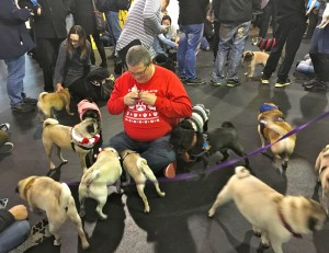 Tim hands out treats to group of pugs at the Pugalug Pug Claus Christmas Party