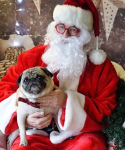 thumbnail_Fishstick the Pug hanging with Santa at the PugALug Party at PawsWay Toronto