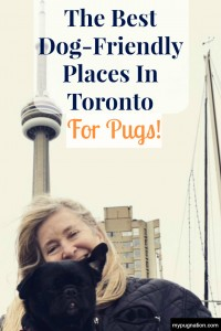 Explore Toronto with your Pug at these dog-friendly places